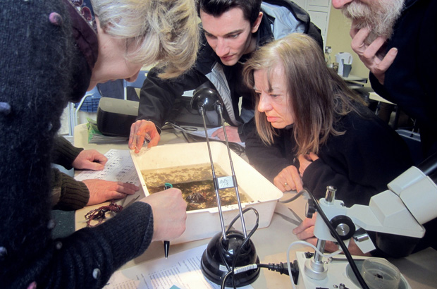 Group of people looking at invertebrate samples