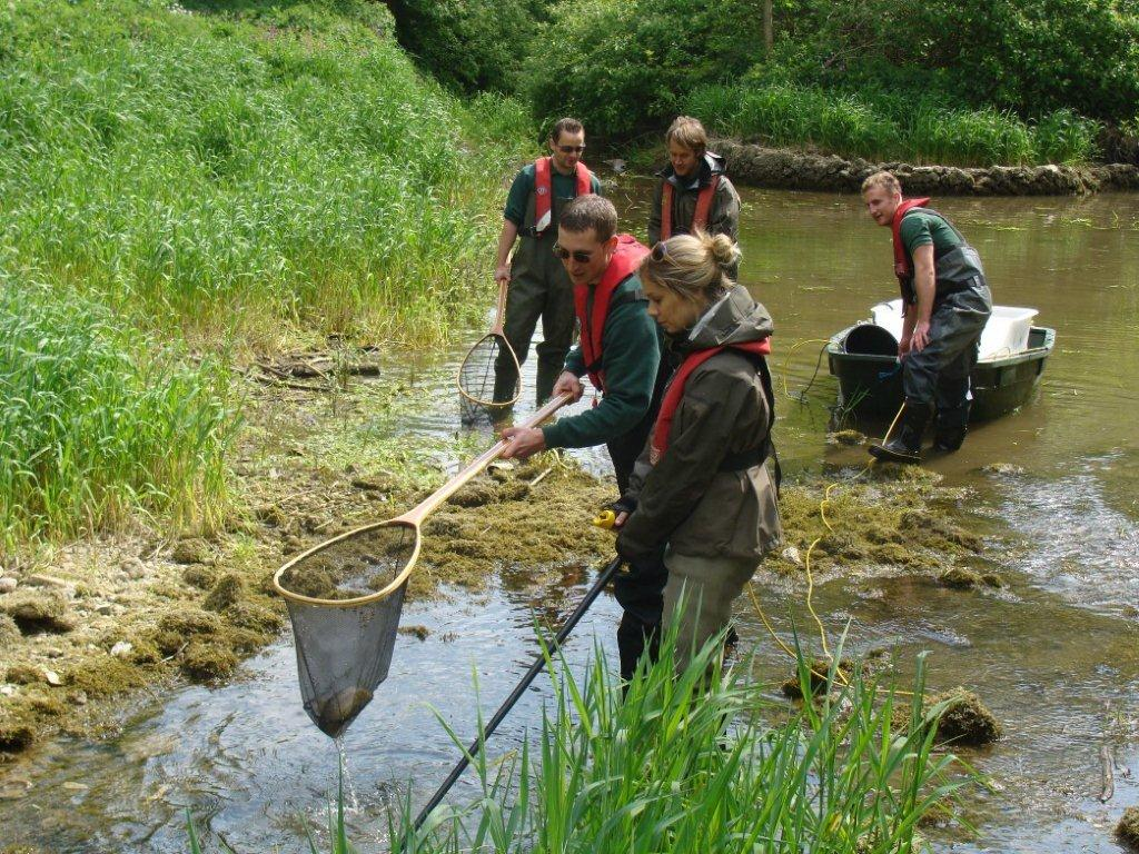 Our fisheries team rescues fish as the River Lathkill dries up