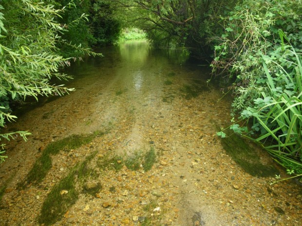A chalk stream, Hertfordshire