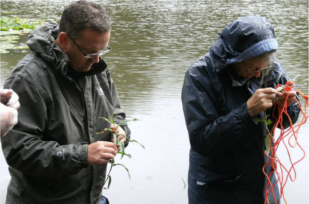 Volunteers bring trained to identify aquatic plants