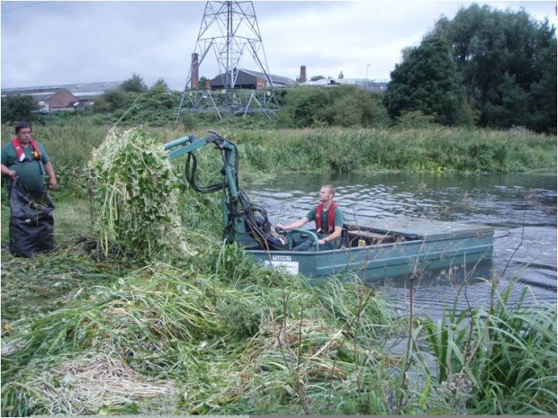 Removing floating pennywort