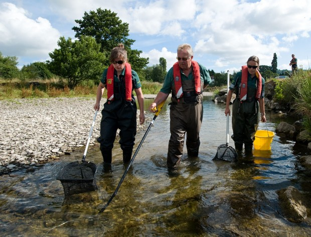 Three people walking through a river rescuing fish