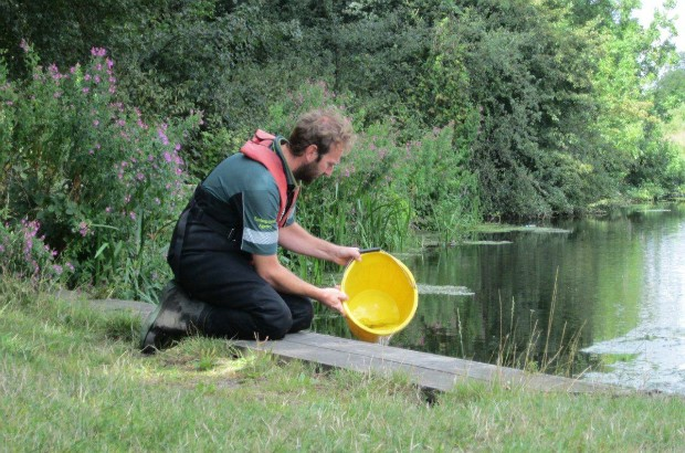 Dan Hayter releasing fish into the river