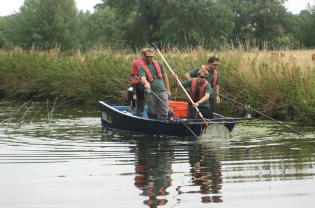 Dan Hayter and his team electrofishing