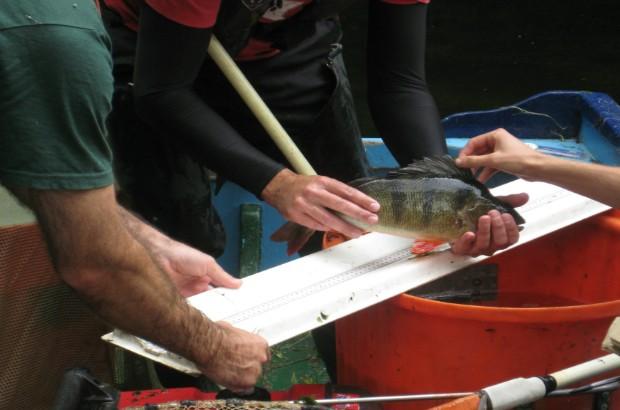 The Environment Monitoring team measuring fish