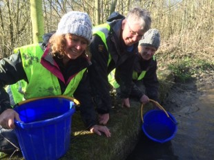 Restocking the rescued lamprey to a safe area
