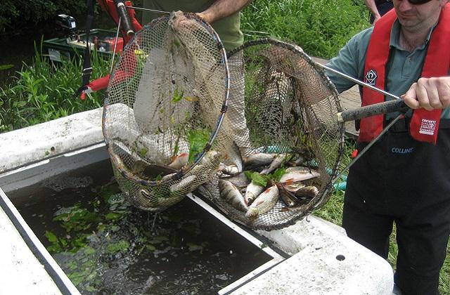 2012-06-20 Fish Rescue - Anglian Region (2)