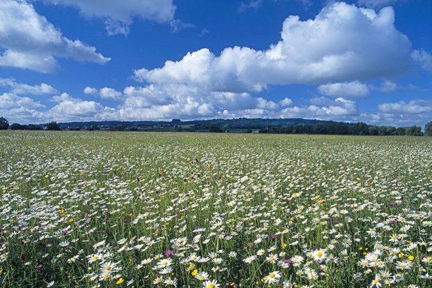Yarnton meadow Oxfordshire species rich grassland and cumulus clouds