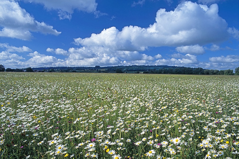 Yarnton meadow Oxfordshire species rich grassland and cumulus clouds