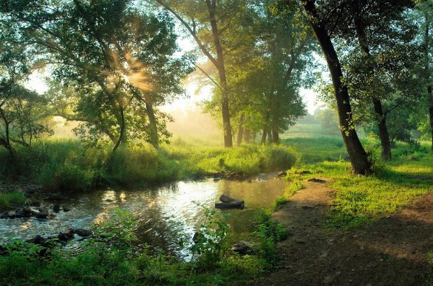 An unpolluted healthy river