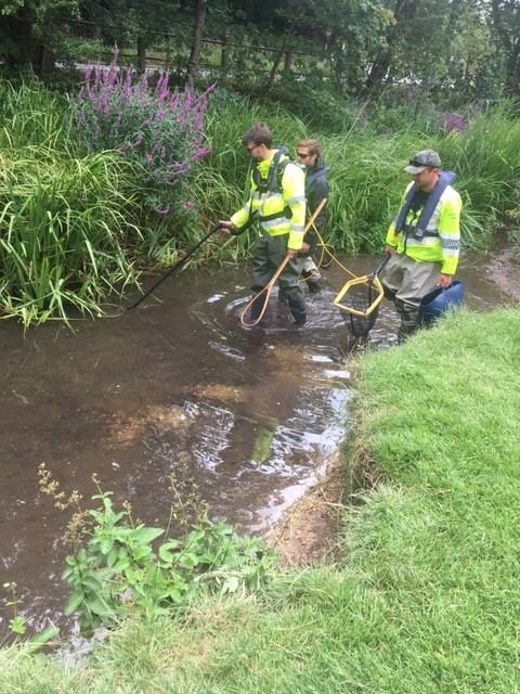 Three EA staff walking through a stream carrying nets, rescuing fish