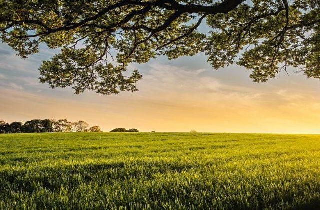 dawn over a field