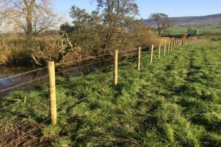 An image of fencing alongside a river in Cumbria, which prevents cattle poaching and improves fish habitats